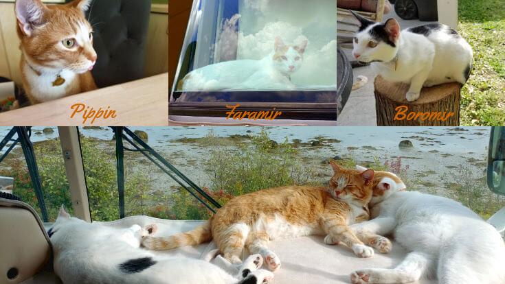 Virtual Kamper Cats
