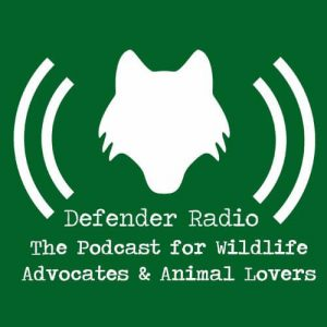 Defender Radio - The Podcast for Wildlife Advocates and Animal Lovers