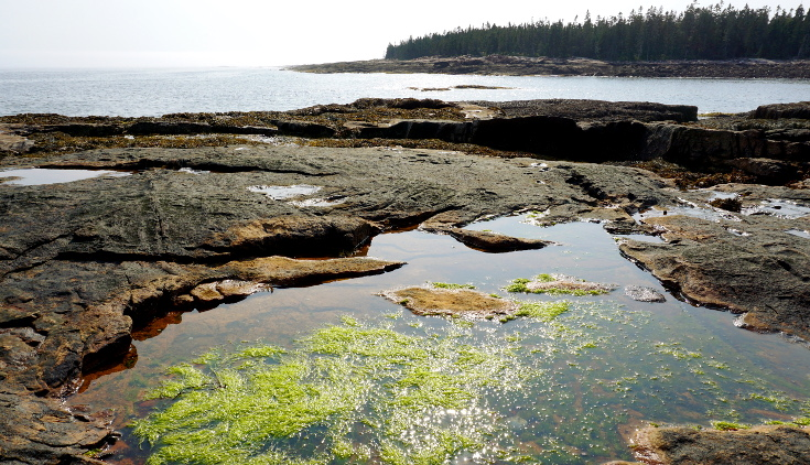 Tidepools in Acadia National Park.