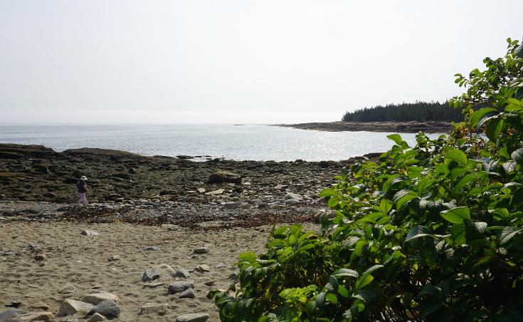 Wonderland trail tidepool hike in Acadia National Park.